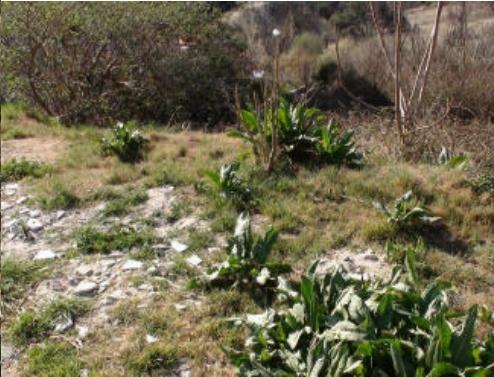 Solares en Miraflores de la Sierra (32440-0001) - foto1