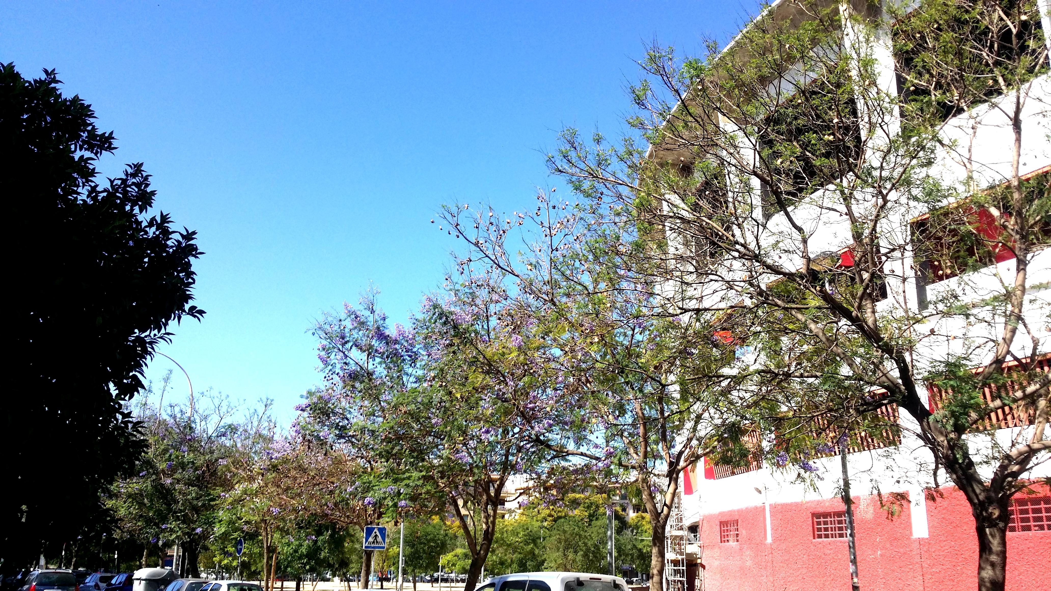 Piso en Sevilla (Vivienda Nervi�n) - foto1