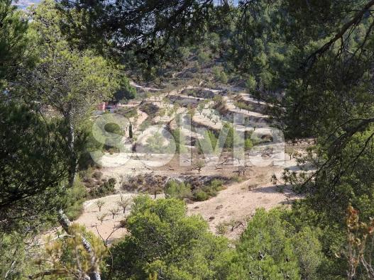 Cortijo en Castalla (Finca en Castalla) - foto18