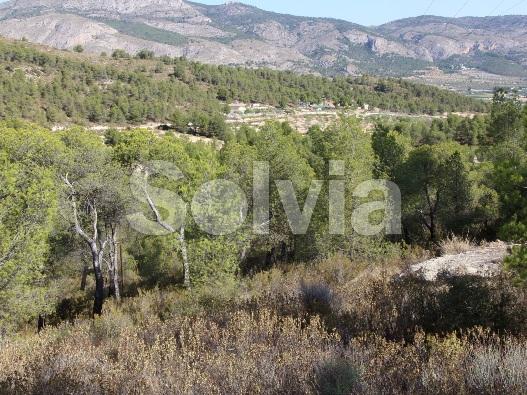 Cortijo en Castalla (Finca en Castalla) - foto19