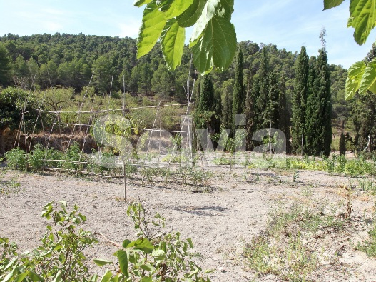 Cortijo en Castalla (Finca en Castalla) - foto17
