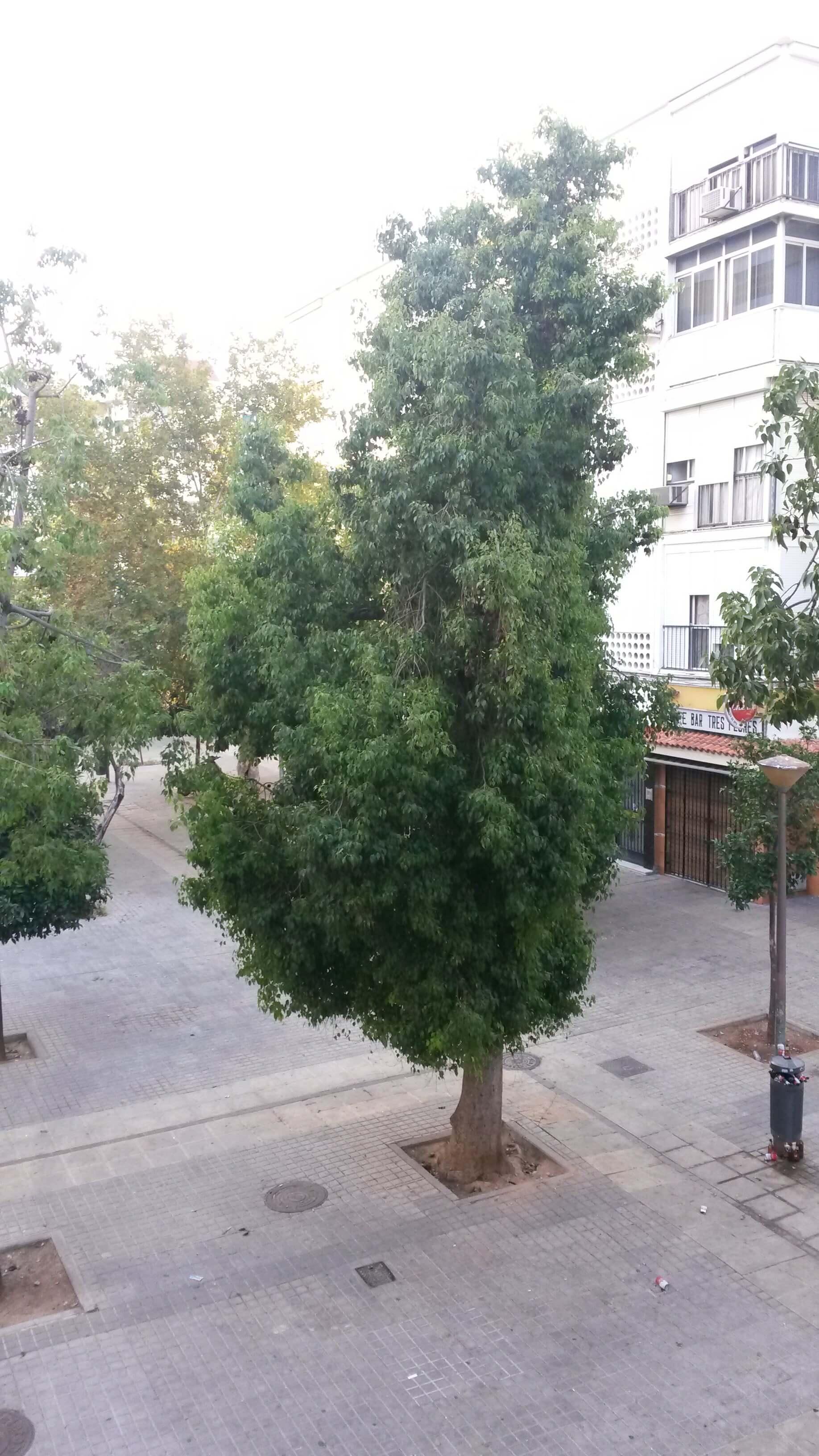 Piso en Sevilla (Piso Villegas ) - foto16
