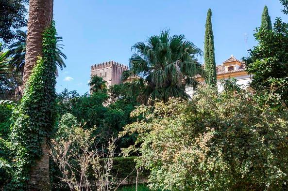 Hotel en Sevilla (Edificio en el Casco Antiguo ) - foto17